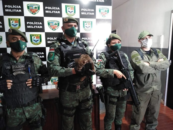 Filhote de onça é resgatado pela Polícia Militar no Amazonas