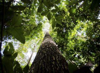 Projeto vai destinar R$ 500 milhões para proteger mata nativa da Amazônia