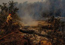 Governo federal libera R$ 3,8 milhões para combate a queimadas no Pantanal