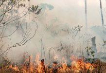 Amazonas já tem aumento de 45% de queimadas no mês de setembro