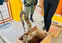 Polícia Militar resgata cobra em uma residência na zona Norte